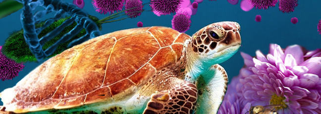 A image depicting many forms of life! A sea turtle takes up most of the image. To the right is a bee landing on pink blossom with green bacteria, a blue strand of DNA and some pink cells in the background.