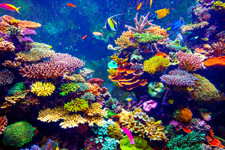 A brightly coloured underwater scene of a coral reef teeming with life.