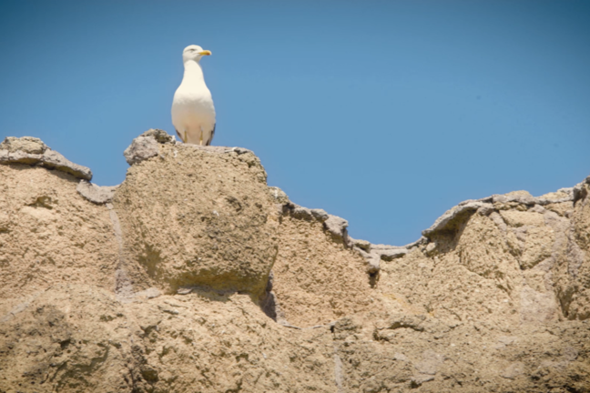 A seagull is sitting on top of a grey stone wall that has large stones in an irregular pattern.