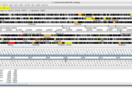 Screenshot from the software Artemis, a genome browser.