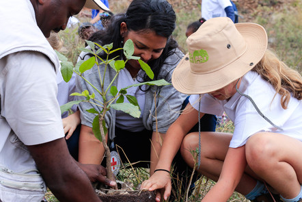 ICRC staff planting trees in Kenya