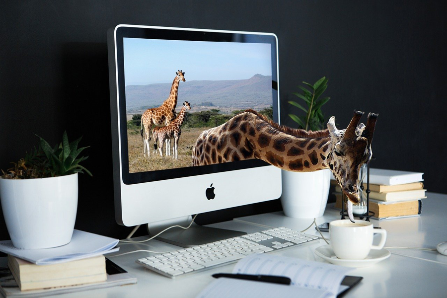 A giraffe on a computer monitor cranes through the screen to lick at a cup of coffee on the desk
