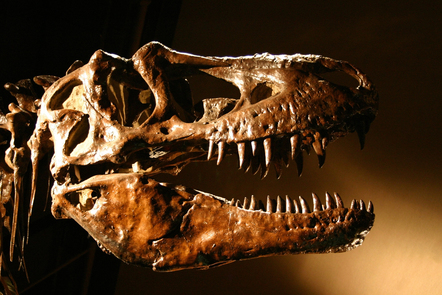 The head of a T-Rex skeleton.