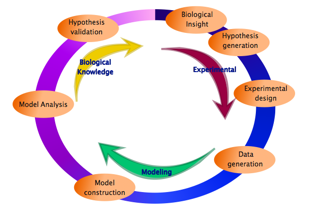 A cycle depicting the systems approach to include the steps involved in the experimental, modeling and gaining biological knowledge]