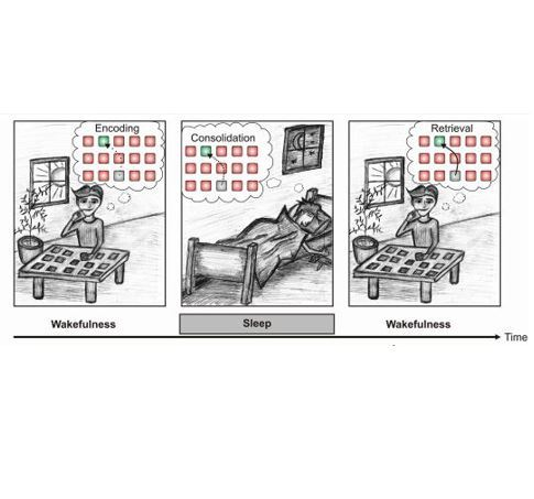 Visualisation of encoding, consolidation and retrieval.