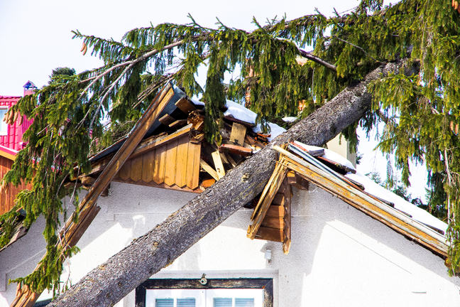 Tree through roof of house