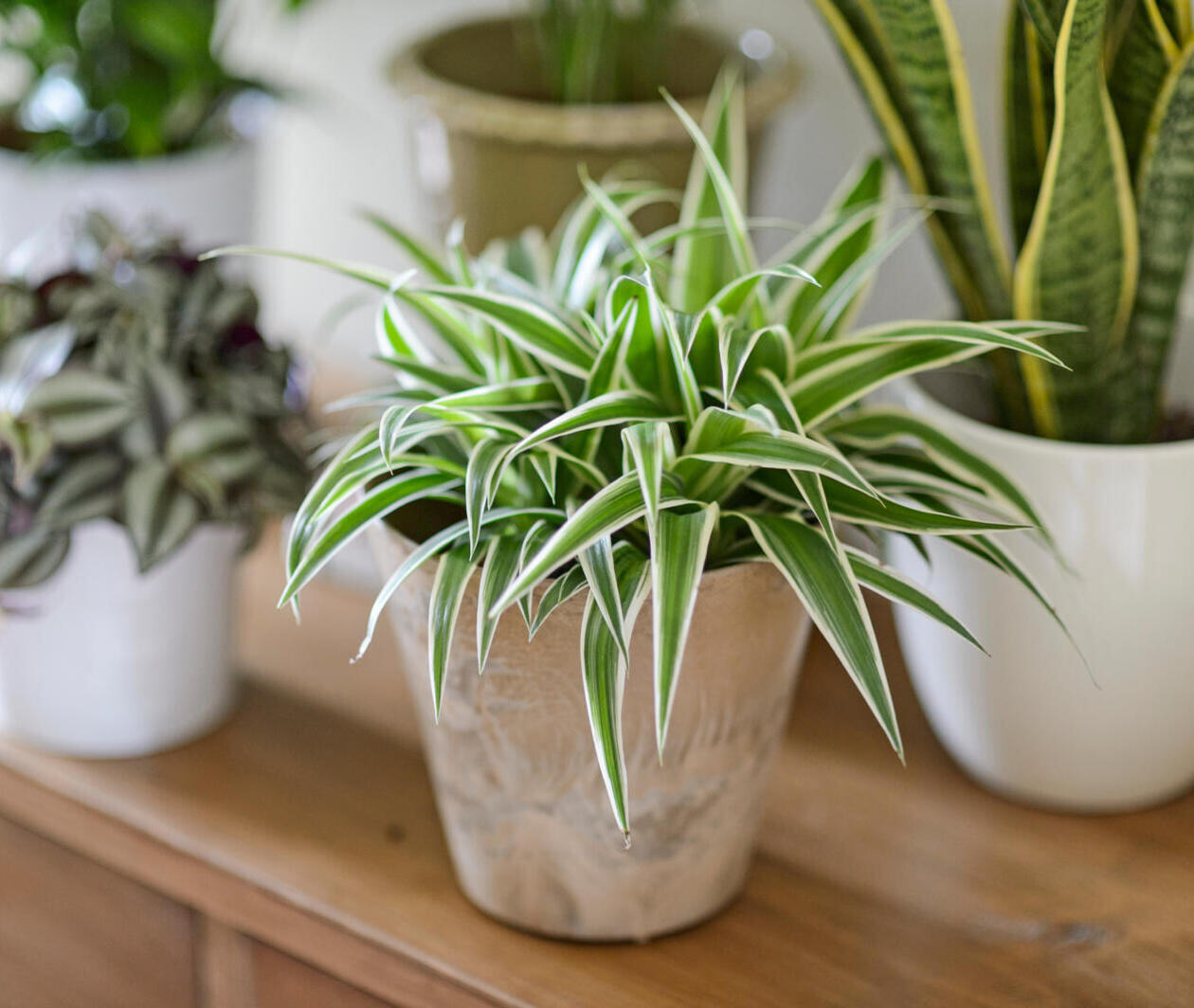 Healthy House Plants: A Complete Guide to Gardening Indoors