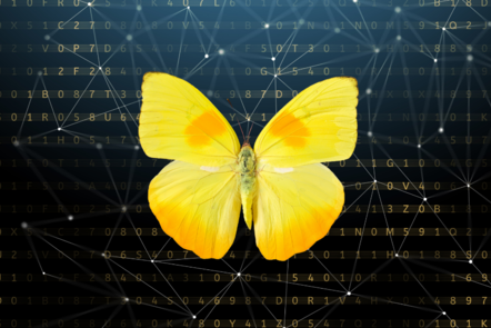 Yellow butterfly against a digital background