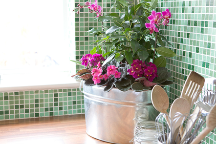 Mixed display of house plants growing by a kitchen window