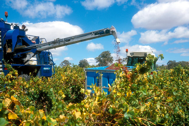 A photo of a large blue machine removing grapes from the vines