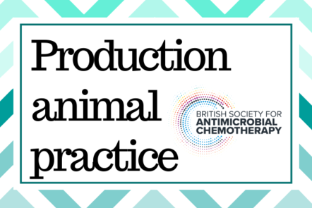 Production animal practice