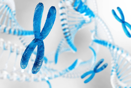 X chromosome against the background of DNA