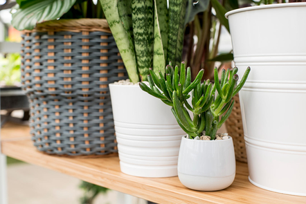 Mix of house plant containers on a shelf