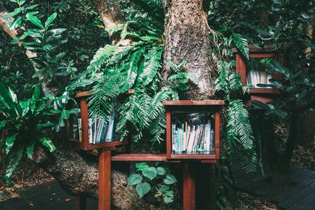 Boxes containing books in a forest