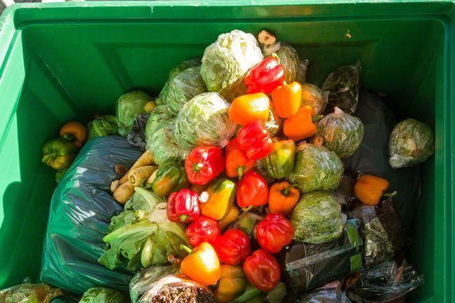 A photgraph of a commercial waste bin full of discarded vegetables, which all look fit for consumption.