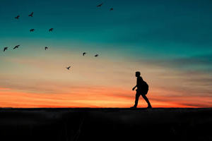 Person with a backpack walking at sunset/sunrise with birds flying in the distance. The person and the birds essentially form a silhouette.
