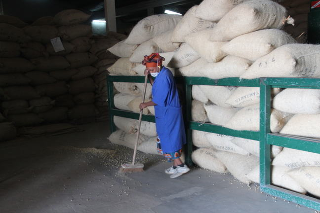 Worker sweeping the floor in a coffee factory