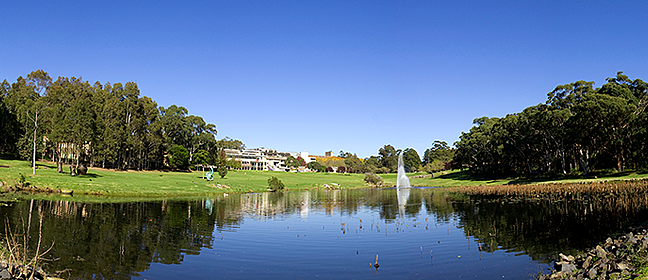 Macquarie University North Ryde campus pond with grass and buildings