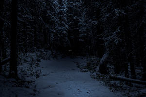 A pair of glowing yellow eyes glint from a dark, snow-covered forest.