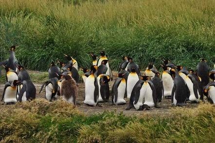 Group of penguins standing.