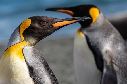 Closeup of penguin.