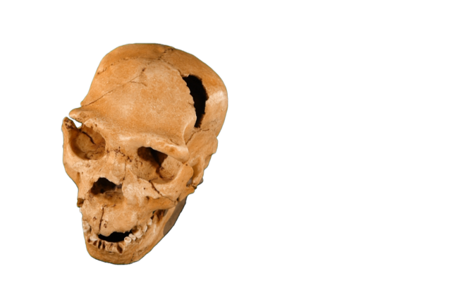 Skull of Early Homo neanderthalensis