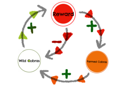 A causal loop diagram showing the Cobra Effect.