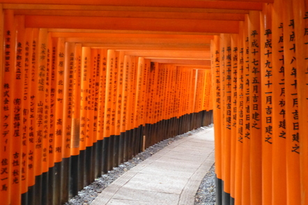 tunnel of torii