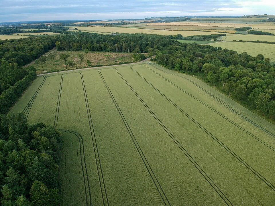 Aerial photograph of a field surrounded by trees
