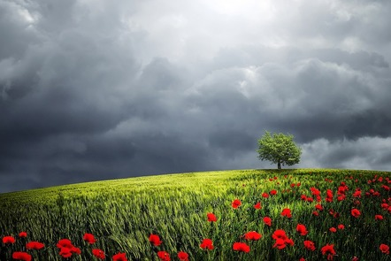 Summer landscape with poppies in the foreground, grey clouds on the horizon, and sun breaking through overhead