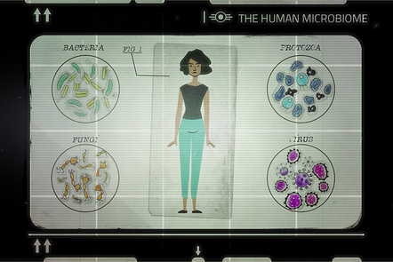 The human microbiota consists of a wide variety of bacteria, viruses, fungi, that live in the body