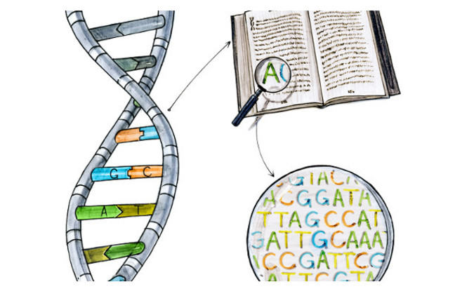 DNA structure, a book of the letters used for DNA bases with a magnifying glass over some of the letters.