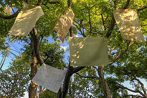 Fabrics hanging from branches of a tree