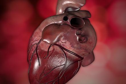 A 3D representation of a human heart.