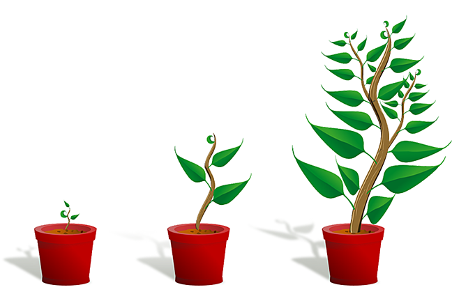A plant at the different stages of growth