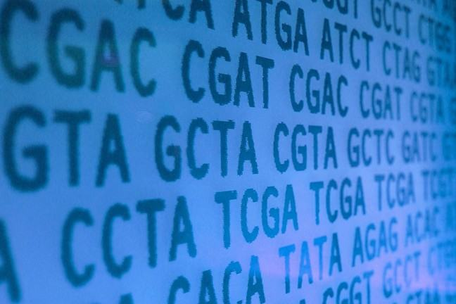 DNA sequence, dark blue letters  CGTA representing bases on paler blue background, an image by Kate Whitley CC-BY