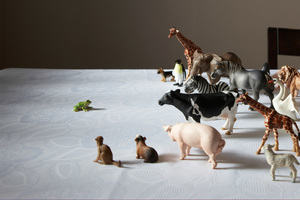 Animal figurines positioned on a table