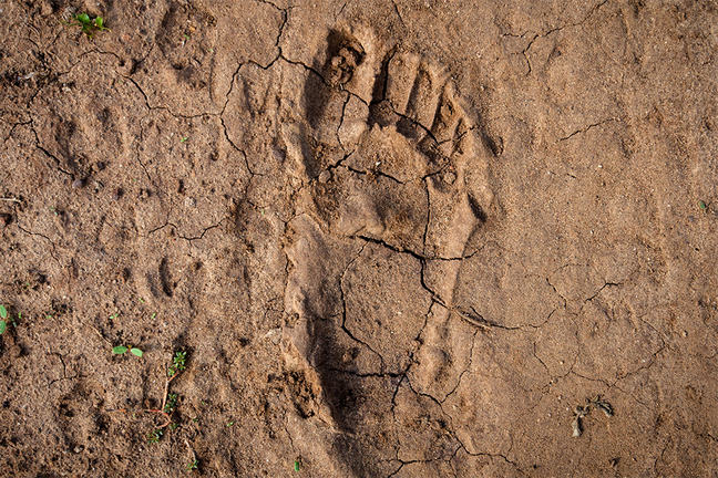 Human footprint in the East-African desert (Malawi) A human footprint on dry, cracked desert earth, in Chikwawa District, southern Malawi, during the severe drought and food crisis in East Africa, caused by El Nino.