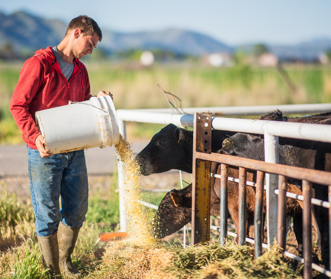 Animal Feed Production: Feed Safety