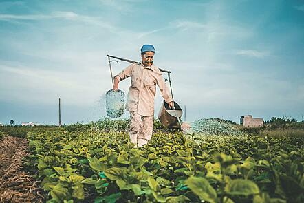 Woman farmer watering crops in Vietnam.