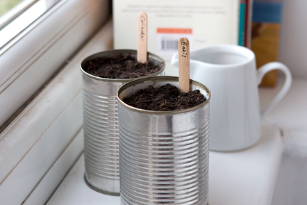 Tins cans containing basil and coriander seedlings growing on a window sill