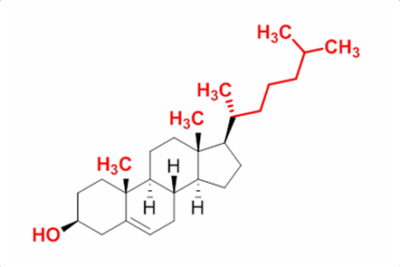 A molecule of cholesterol
