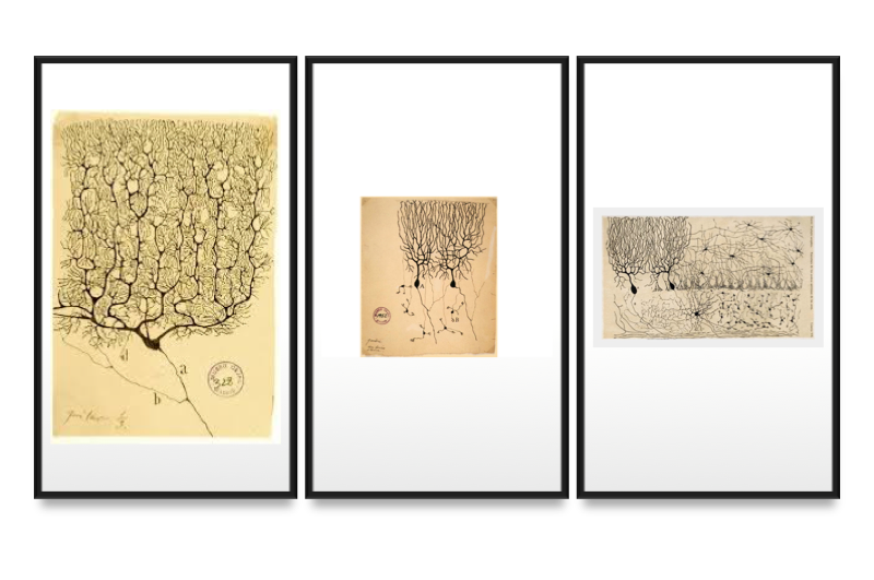 Cajal's drawings of neurons