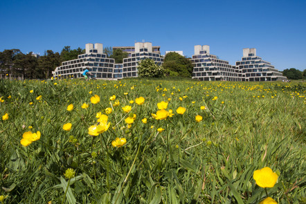 A spring field from the University of East Anglia