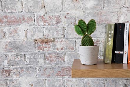 Cactus growing in a pot on a bookshelf