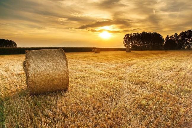 Hay (the sort of hay where needles hide)