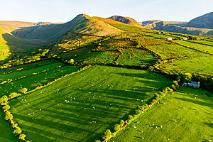 An aerial picture of sheep in a field in the sun in Ireland.