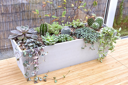 Mixed display of cacti and succulent plants on a window sill