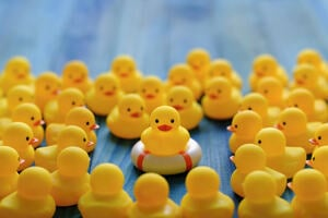 Rubber ducks with one in the middle on top of a life preserver buoy