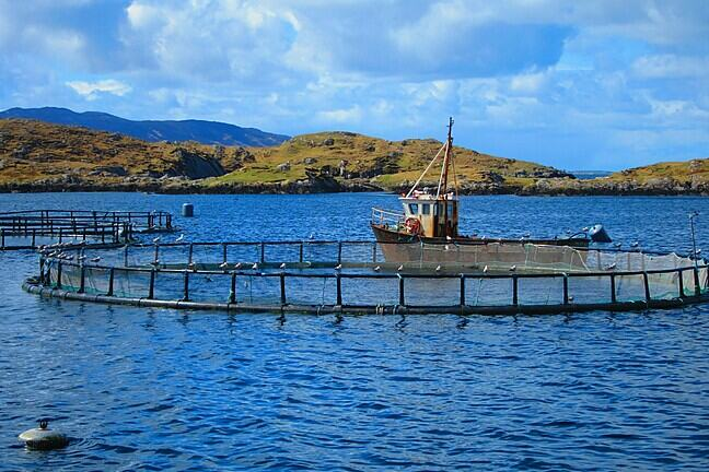 A bay in Ireland with a salmon farming pen in the foreground